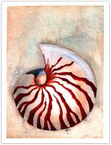 104 Nautilus4 WM